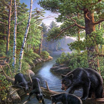 tranh con gấu 60x80